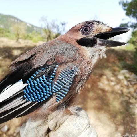 Una de les espècies d'ocells que es poden trobar al parc.