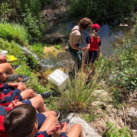 Sant Roc certifica la recuperació decrancsi ofegabous al nostre entorn gràcies a un projecte educatiu