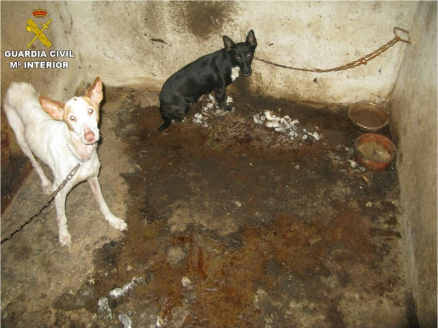 Dos dels gossos rescatats.