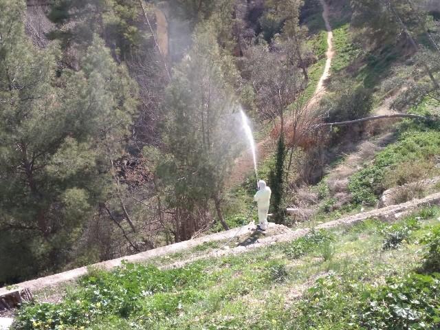 Polvoritzacions d'arbres per a combatre la plaga.