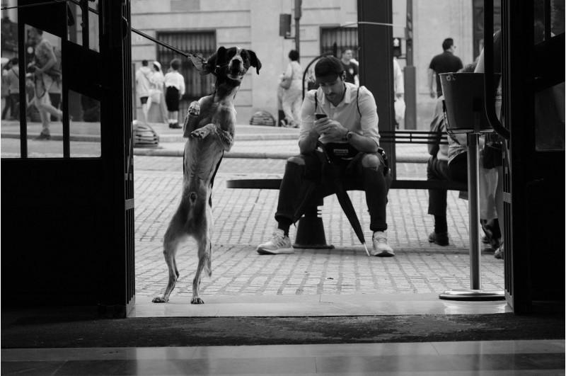 Fotografia de Francisco Manuel Mas Mas per a la categoria Tema Lliure d'adults