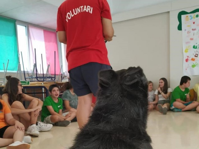 Activitat organitzada per la SocietatProtectora d'Animals iPlantes d'Alcoi / Xarxes socials