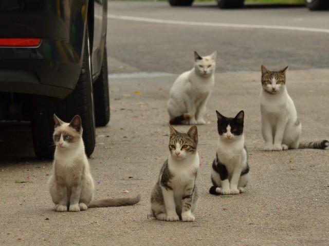 Alcoi disposa d'entre 30 i 35 colònies controlades de felins.