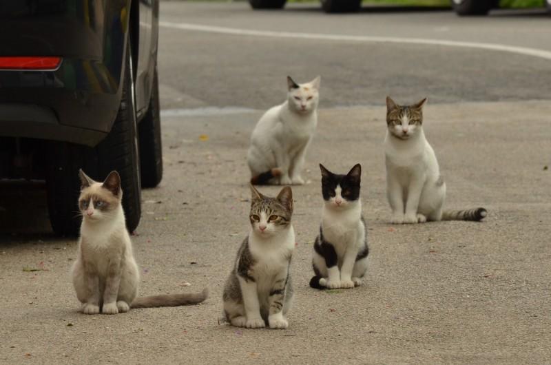 Gats, Imatge de recurs