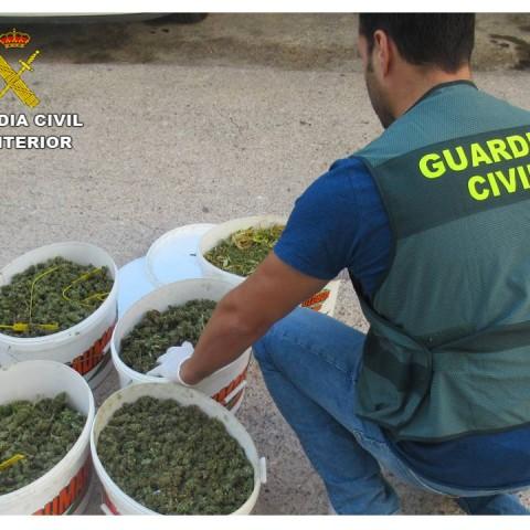 Cabdells preparats per a ser envasats i transportats / Guàrdia Civil