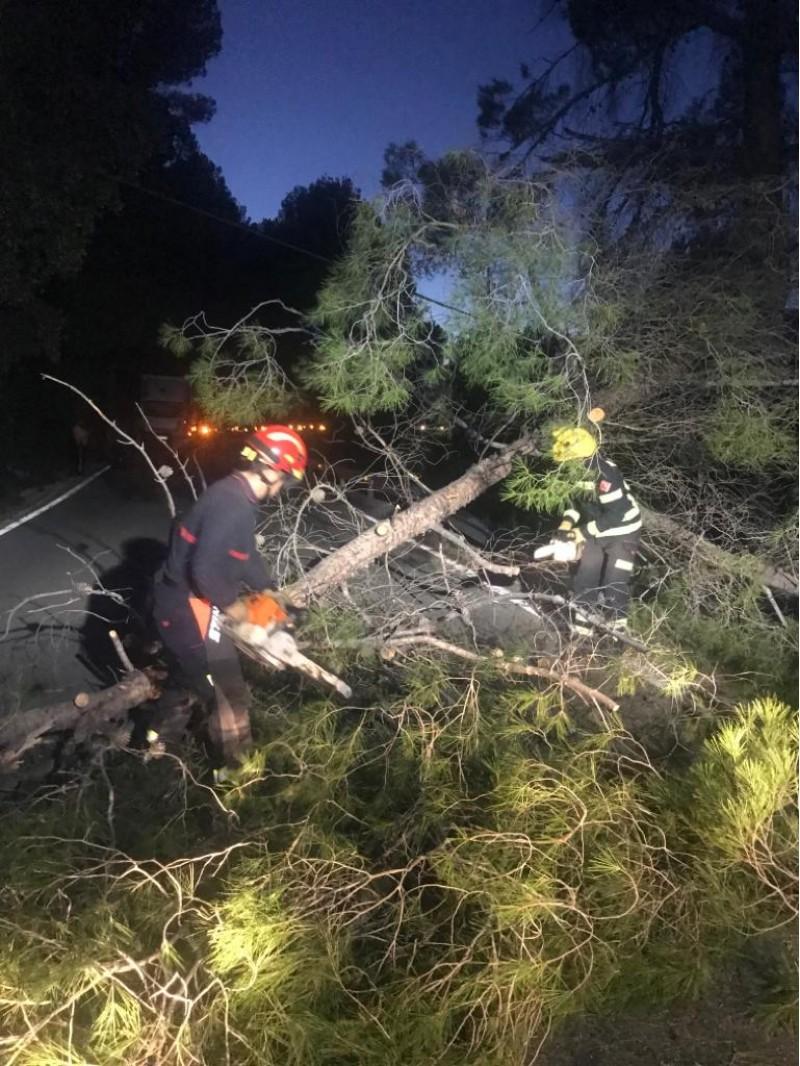 Els bombers durant la retirada de l'arbre.