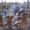 L'Ajuntament limitarà el nombre de fogueres per a rostir en la Romeria de Sant Antoni