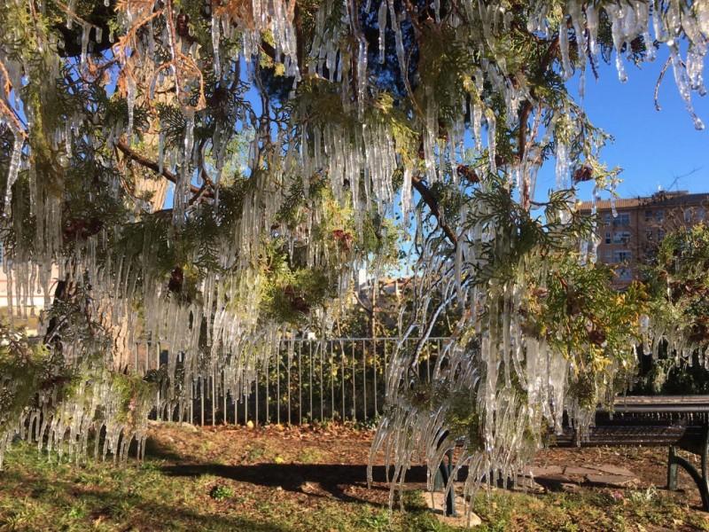 Un arbre ple de caramells, aquest matí al parc de Cervantes d'Alcoi.