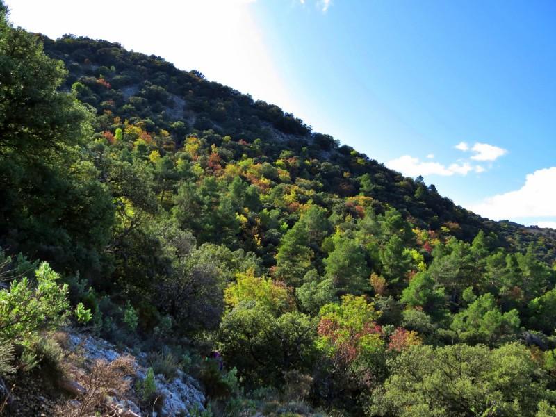 La cobertura forestal suposa el 63,61% del terme municipal d'Alcoi.