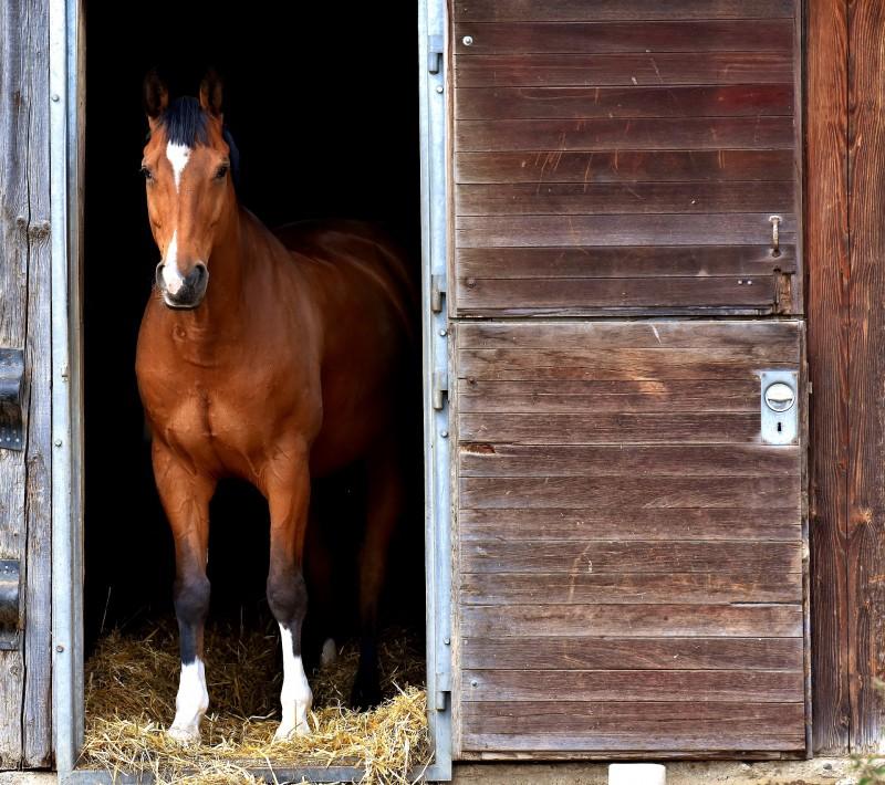 Imatge de recurs - cavall en quadra, genèrica