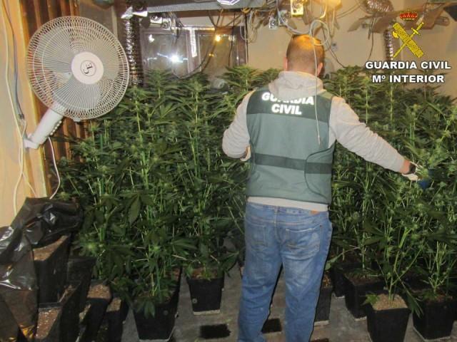 Descoberta una plantació de marihuana a Alcoleja per la gran quantitat de llum que utilitzava