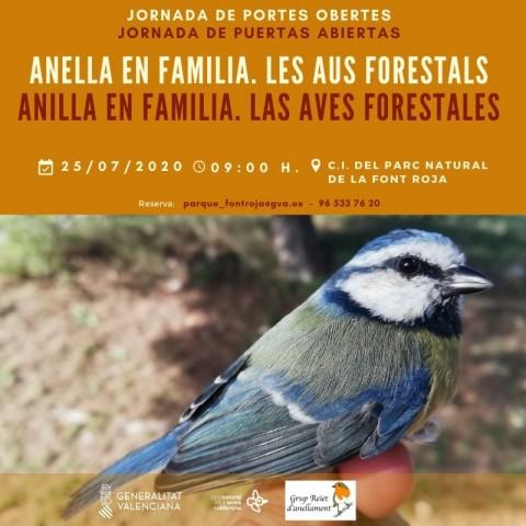 Cartell Anella en familia. Les aus forestals