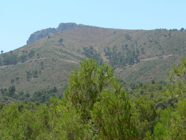 Bosc |Facilitat per Diputació d'Alacant