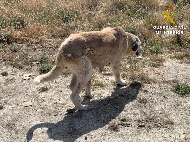 Un dels gossos trobats en l'explotació.