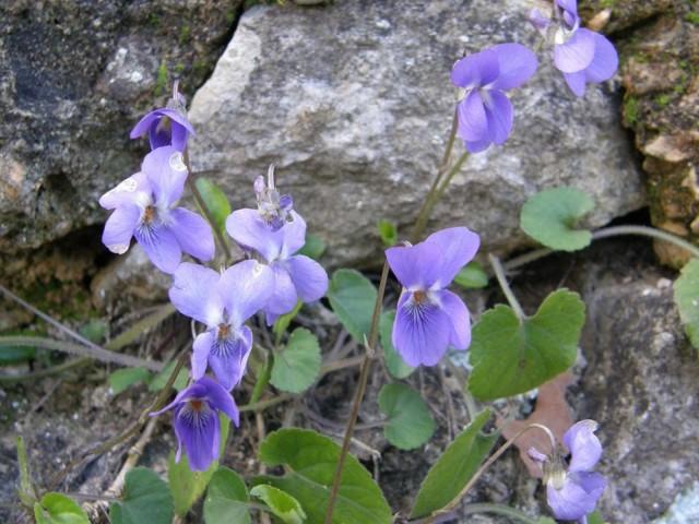 Alcoi és el municipi valencià amb major diversitat de flora i fauna