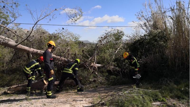 Una de les actuacions dels Bombers a les nostres comarques per retirar un arbre caigut.