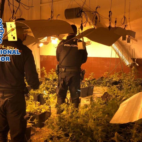 4 detinguts a Alcoi: tres d'ells per robar la marihuana del quart