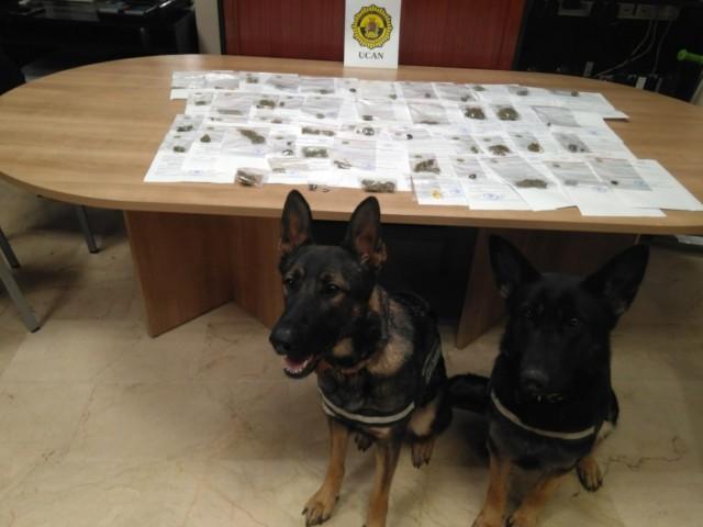 Dana i Mona, les dos gosses de la Unitat Canina de Cocentaina
