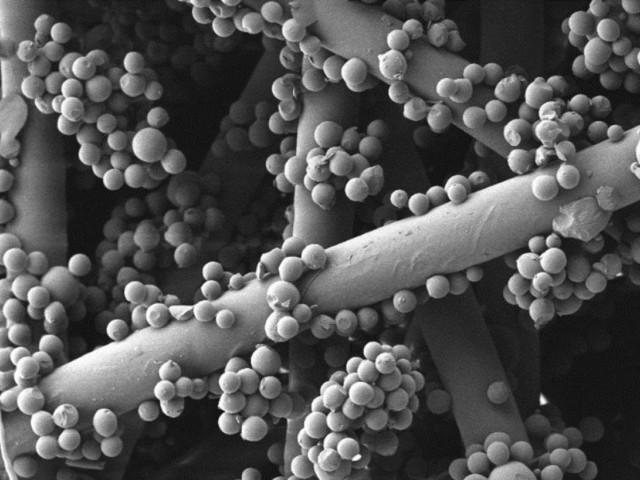 Imatge microscòpica de la resina de pi / Campus d'Alcoi UPV