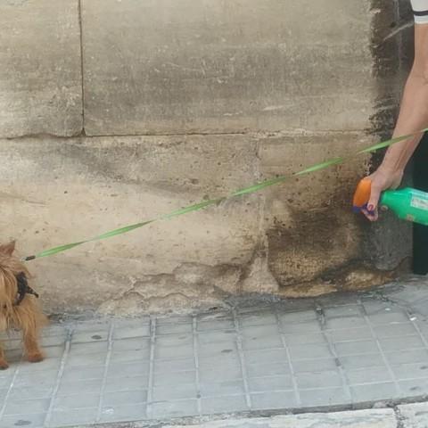 La Protectora d'Animals torna a eixir al carrer per a informar sobre els animals de companyia