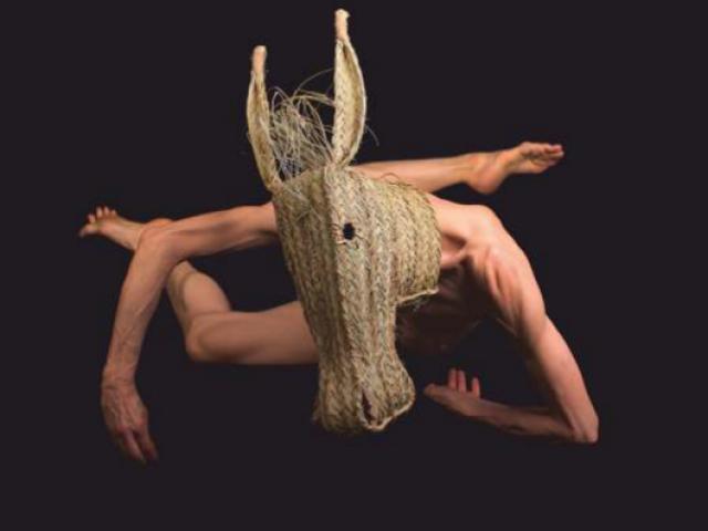Animal de Sequia de Sol Picó es va escenificar a la Mostra de 2019 / Mostra