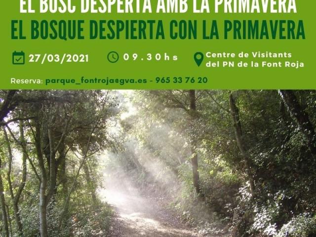 'El bosc desperta amb la primavera', ruta al mirador dePilats