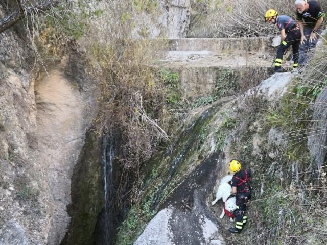 Els bombers rescaten un gos en el Racó Sant Bonaventura