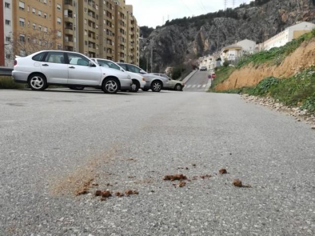 Una cagada de gos enmig d'un carrer d'Alcoi