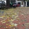 Fulles en la vorera, en un carrer d'Alcoi