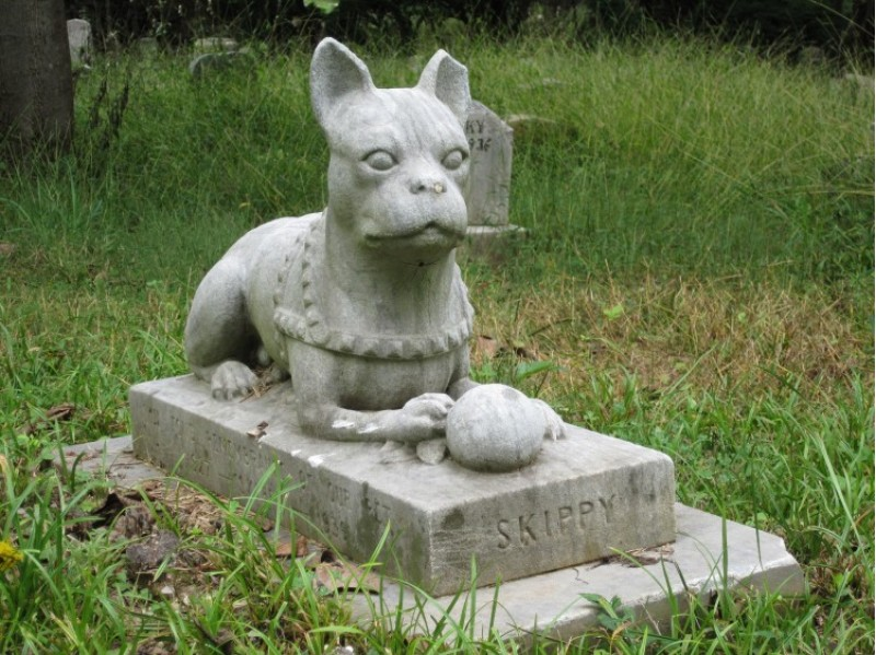 Cementiri d'animals. Imatge lliure