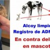 Portada del grup de Facebook 'En contra de l'ADN en mascotas'