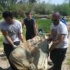 Els voluntaris retiren un matalàs del riu. Imatge de la Fundació Limne