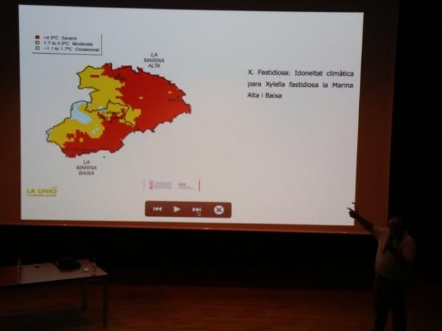 Per combatre la Xylella fastidiosa s'ha de contenir la infecció per evitar la seua propagació / Ajuntament Benilloba