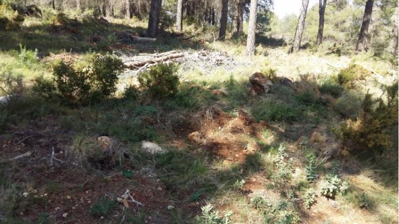 Reforestació d'11 hectàrees de la Serra Mariola, en el terme municipal d'Agres / GVA